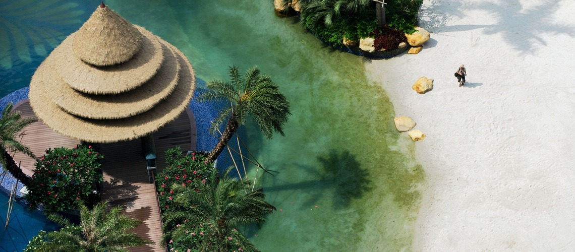 Tropical Paradise Hidden in Urban Jungles